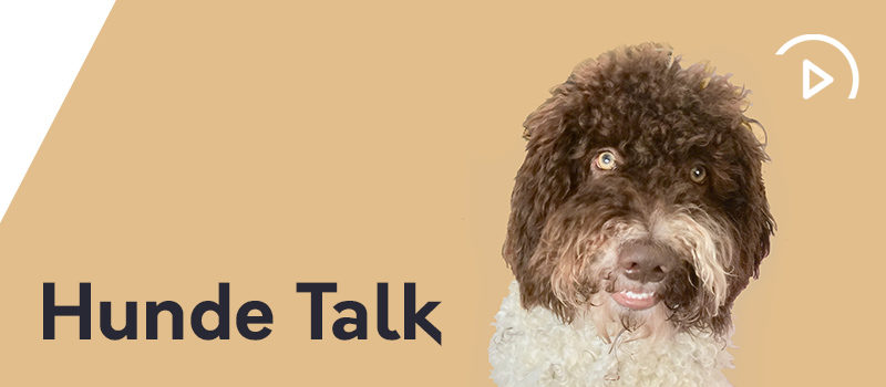 Ein neues Gesetz – HUNDE TALK | EP005
