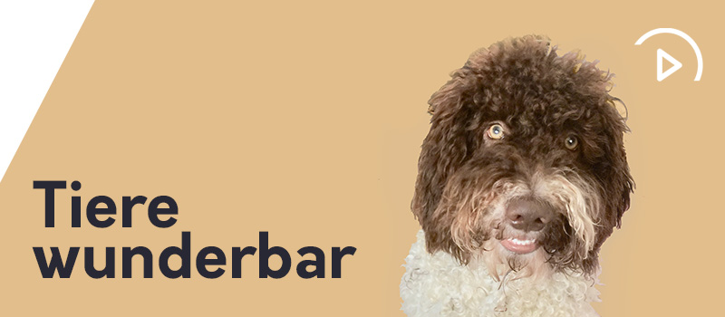Hunde in der Corona-Krise – HUNDE TALK | EP010